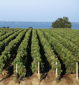 Bordeaux vingard