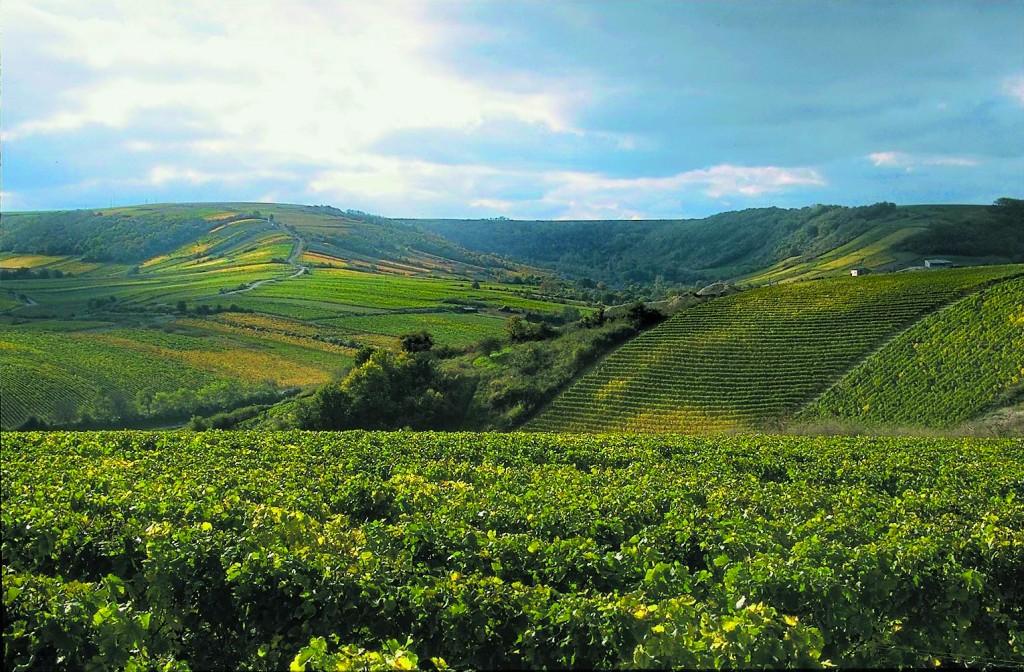 Vinodlingar i Sancerre