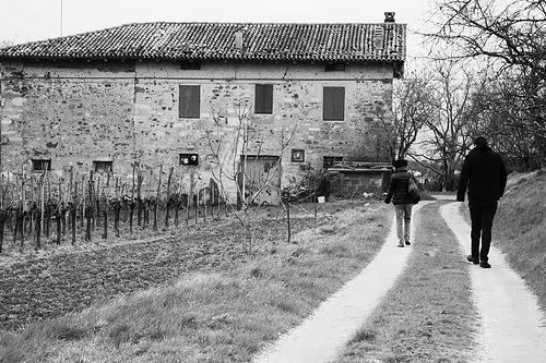 Landskap och vingård i Friulien