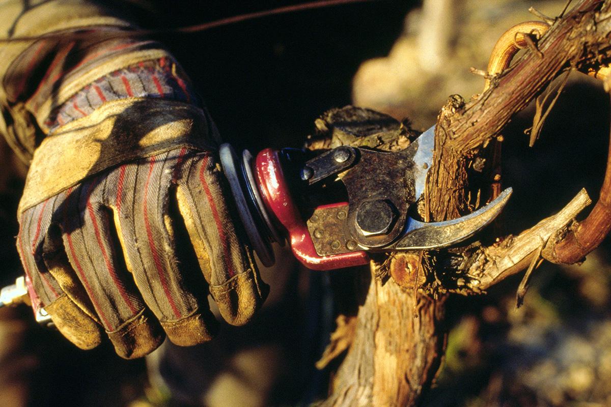 Beskärning (Copyright: Deutsches Wein Institut, www.deutscheweine.de)