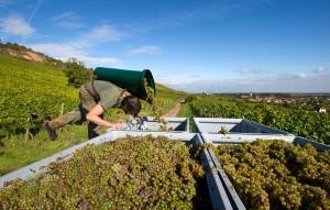 Foto Copyright: Deutsches Weininstitut