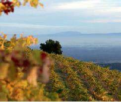 vingård zonin