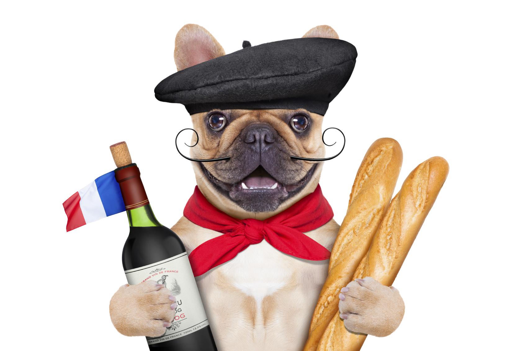Fransk bulldog med rött vin, baguette & basker. ©damedeeso by iStock