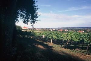 Weinviertel1