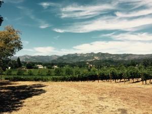 Vingård Napa Valley
