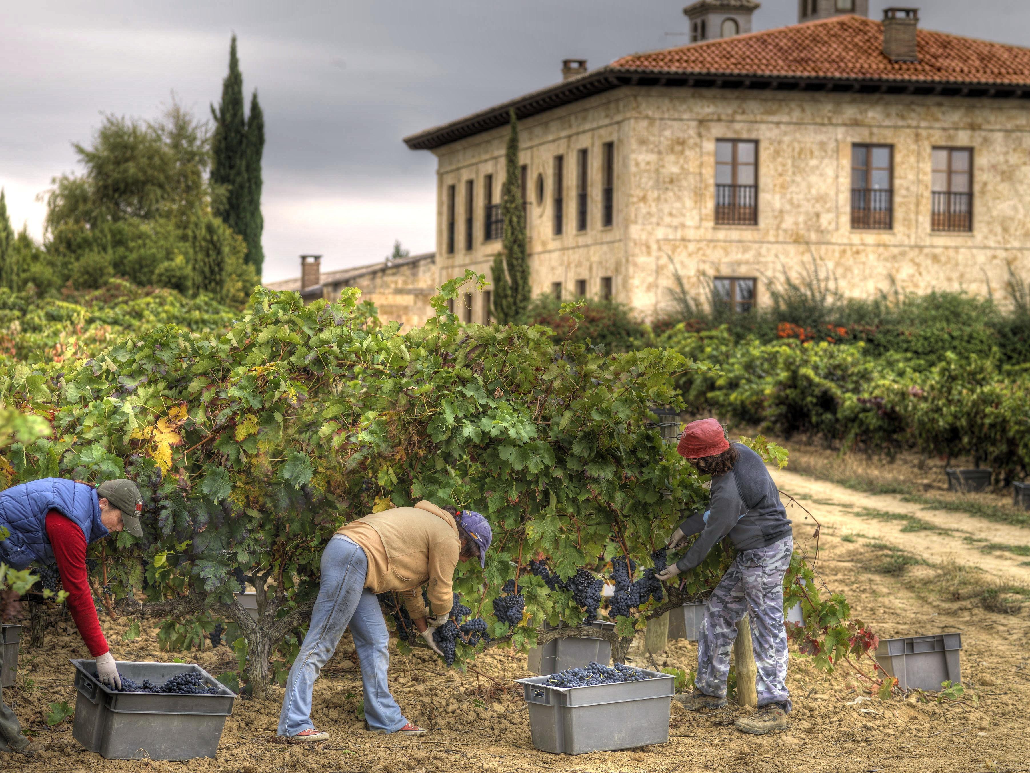 Perfekt skötta vinodlingar vittnar om höga kvalitetskrav.
