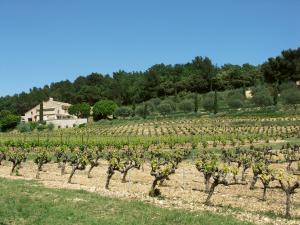 Domaine-Grange-Marcellin-bulding-and-vine