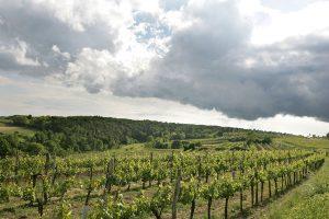 Weinviertel 31 300x200