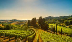 vineyard 300x175